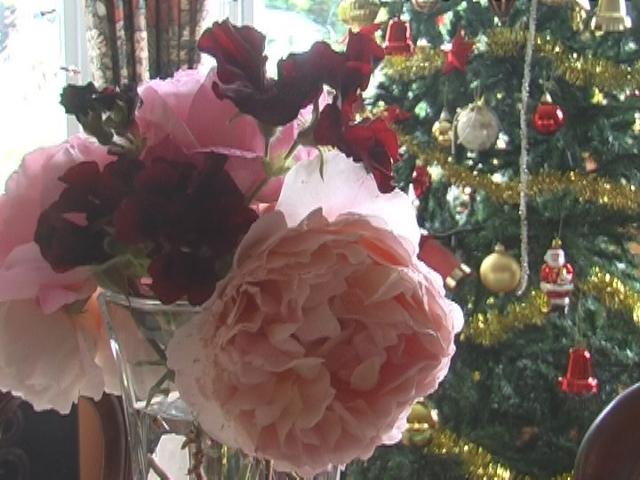 Xmas Roses 2012