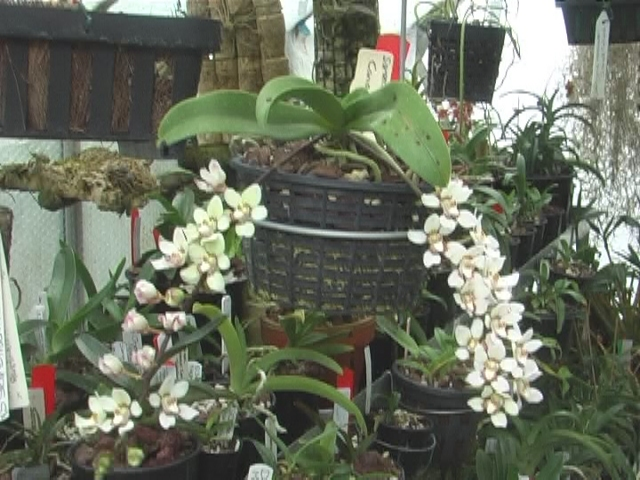 Orchids 2013